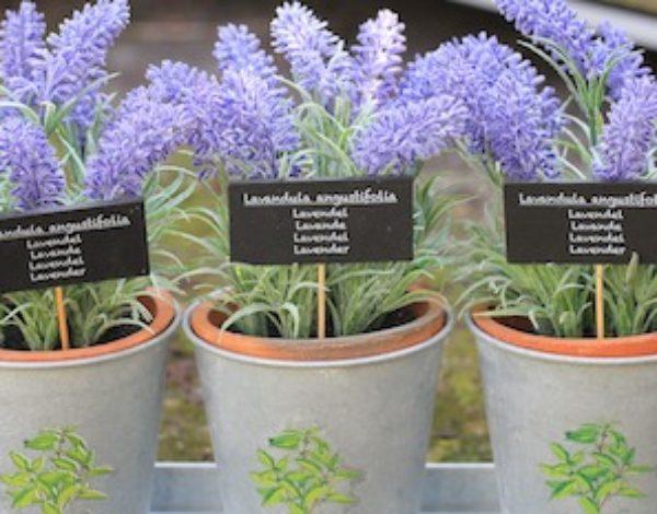 Lavendel für deine Balkon-Oase in Töpfen anpflanzen!